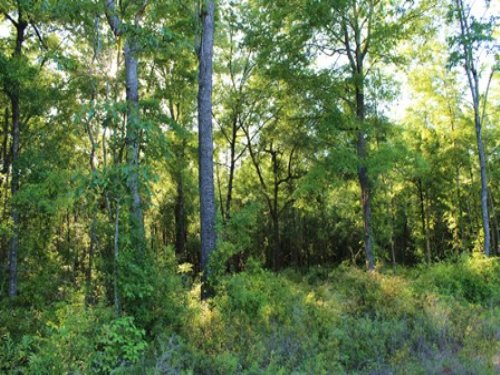 5 Acres In Suwannee County : Live Oak : Suwannee County : Florida