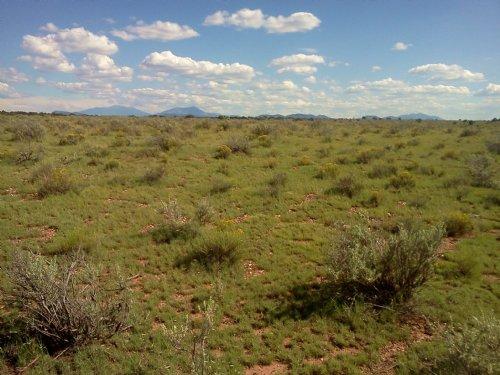 1.25 Acre Grand Canyon Estates. : Flagstaff : Coconino County : Arizona