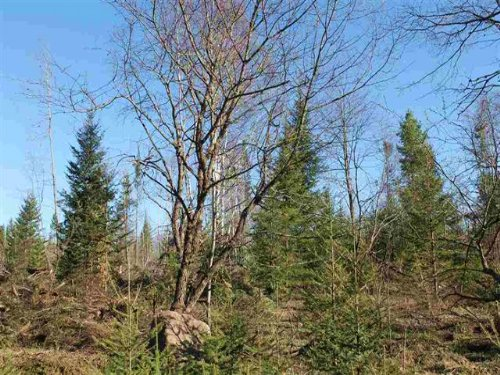 Lot 1 Holli Blue Rd, Mls# 1093796 : Michigamme : Marquette County : Michigan