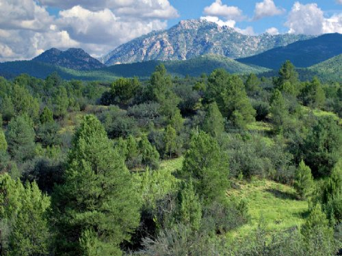 Arizona's Best Selection Of Land : Saint Johns : Apache County : Arizona