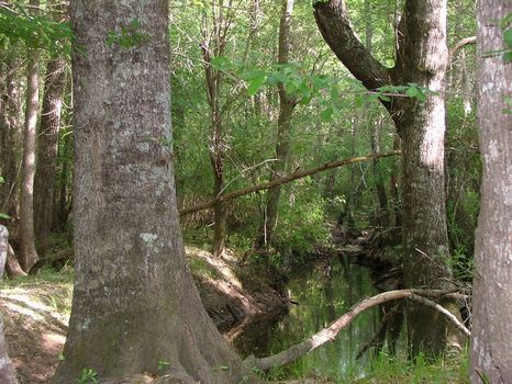 58 Acres : Lyons : Toombs County : Georgia
