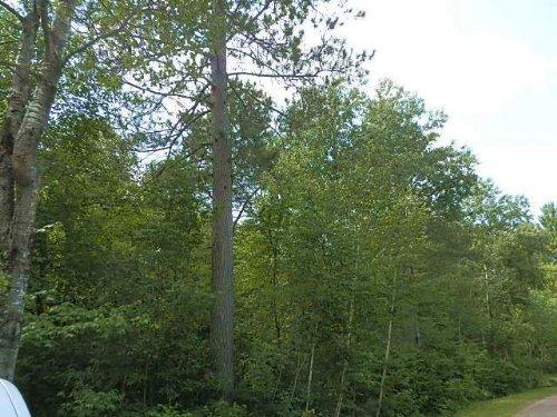 Mls 157138 - Lots 1-4 Curtis Ln : Minocqua : Oneida County : Wisconsin