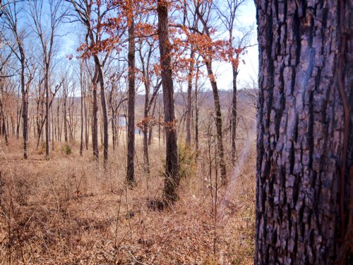 5.11 Acres; 32 Kniess Ct. : Troy : Lincoln County : Missouri