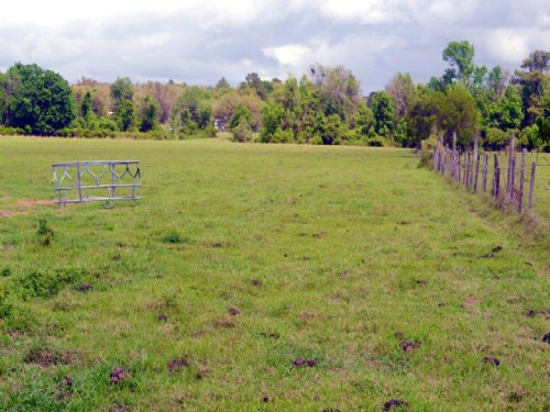 Pasture And Timberland 61 Acres : Hawthorne : Putnam County : Florida