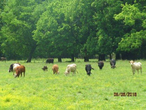 Creek-side Cattle Farm : Sylacauga : Talladega County : Alabama