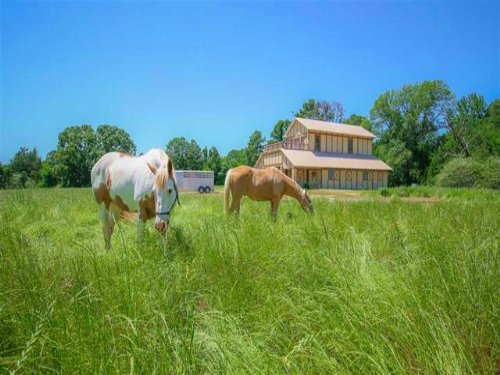 Executive Ranch / 30412 : Daingerfield : Morris County : Texas