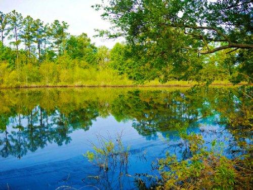 Longleaf Hill : Sylvania : Screven County : Georgia