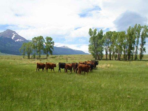 Ula Meadows Ranch : Westcliffe : Custer County : Colorado