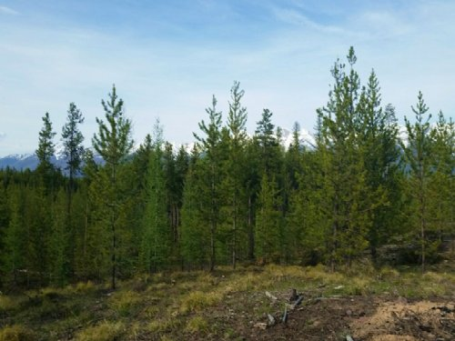 Elk Creek Preserve Lot 5 : Condon : Missoula County : Montana