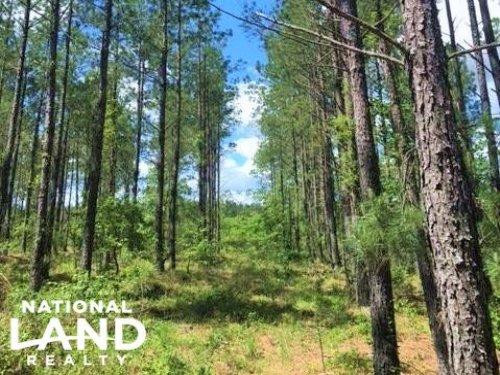 Aiken County Timber Investment : Williston : Aiken County : South Carolina