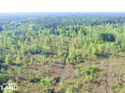 Private Hunting Tract : Brunswick : Glynn County : Georgia