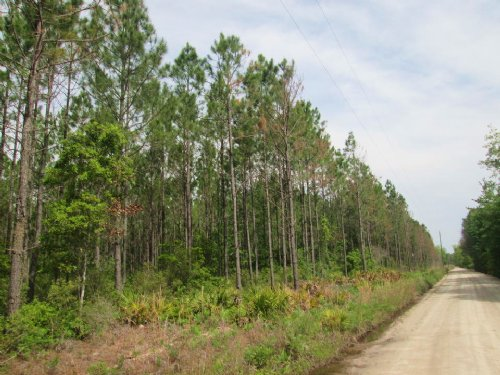 47 Acre Investment Tract : Millwood : Ware County : Georgia