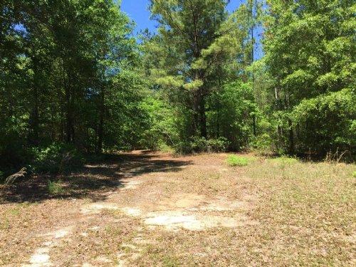 40 Acre Hunter's Retreat : Alamo : Wheeler County : Georgia