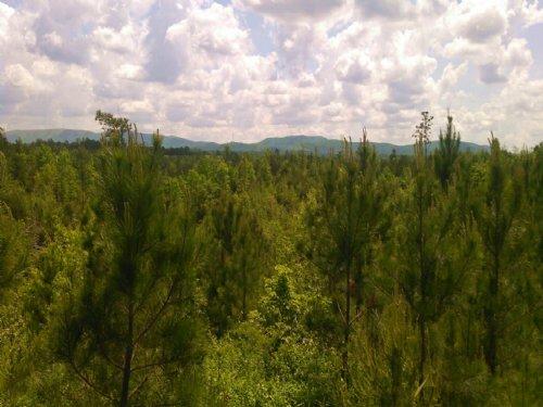 S B Tract 9552 : Adairsville : Bartow County : Georgia