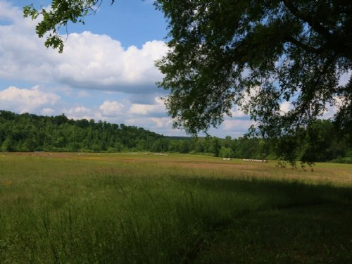 Wolf Creek Farms - 42+/-  Acres : Pell City : Saint Clair County : Alabama