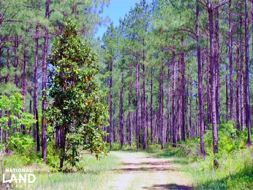 The Brown Hunting Preserve : Vancleave : Jackson County : Mississippi