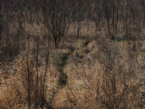 12 Great Deer Hunting Acres : Pierson : Montcalm County : Michigan