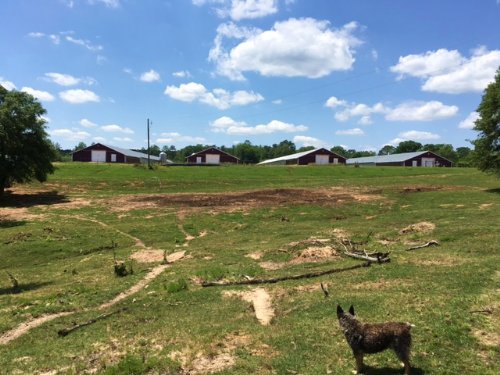 88± Ac Poultry Farm & Mobile Home : Mize : Smith County : Mississippi