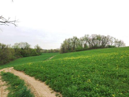 Hunting / Farmland 112 Acres : Avoca : Iowa County : Wisconsin