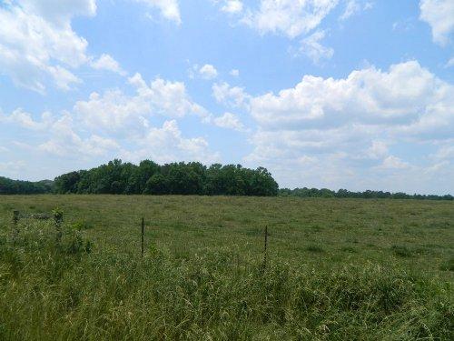 105 Acre Cattle Farm : Stephens : Oglethorpe County : Georgia