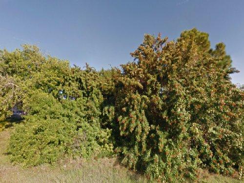 Lehigh Acres Lot For Sale : Lehigh Acres : Lee County : Florida