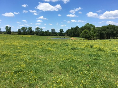 43+/- Ac Poultry Farm : Mount Olive : Smith County : Mississippi