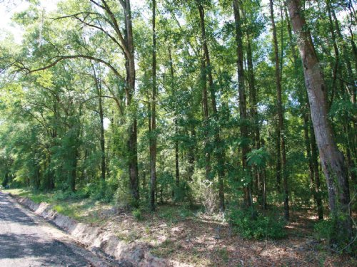 Wooded Acreage For Sale : White Springs : Columbia County : Florida