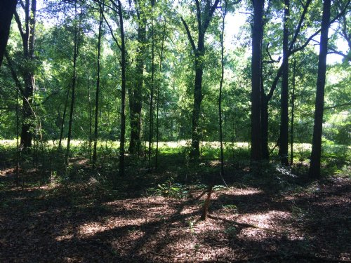 2.8 Acres Just Outside Of Troy : Troy : Pike County : Alabama