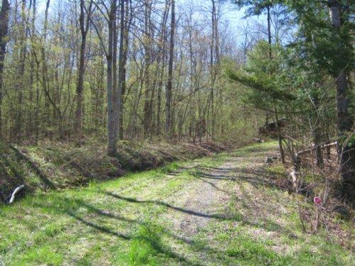 Building Lot Near Ithaca Driveway : Cayuta : Schuyler County : New York