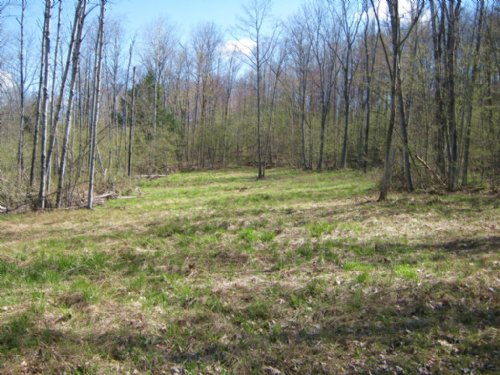 Wooded Building Lot Near Ithaca : Cayuta : Schuyler County : New York