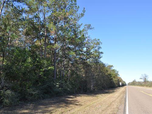 50 Ac Fm 787 Timber : Saratoga : Hardin County : Texas