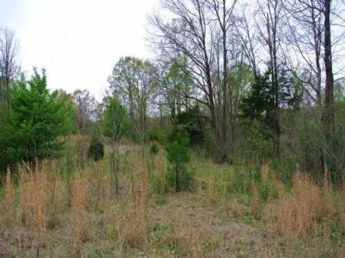24 Acres In Tate, County : Senatobia : Tate County : Mississippi