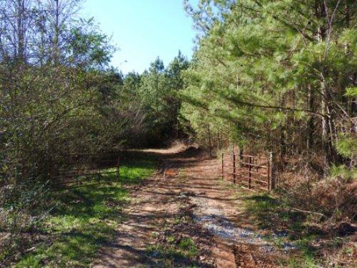 Log Round Mountain Tract #9586 : Ellijay : Gilmer County : Georgia
