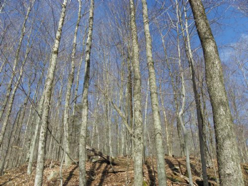 Hans Creek Forest : Edinburg : Saratoga County : New York