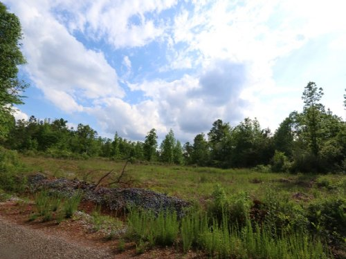 53+/- Acres Hunting Land : Sycamore : Talladega County : Alabama