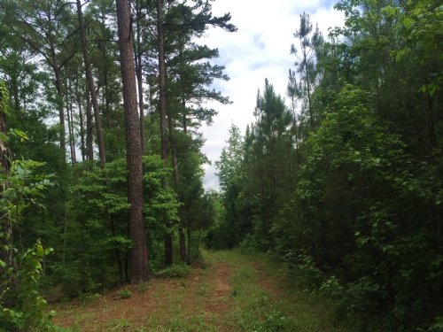 42+/- Acres With Pond In Edgefield : Modoc : Edgefield County : South Carolina