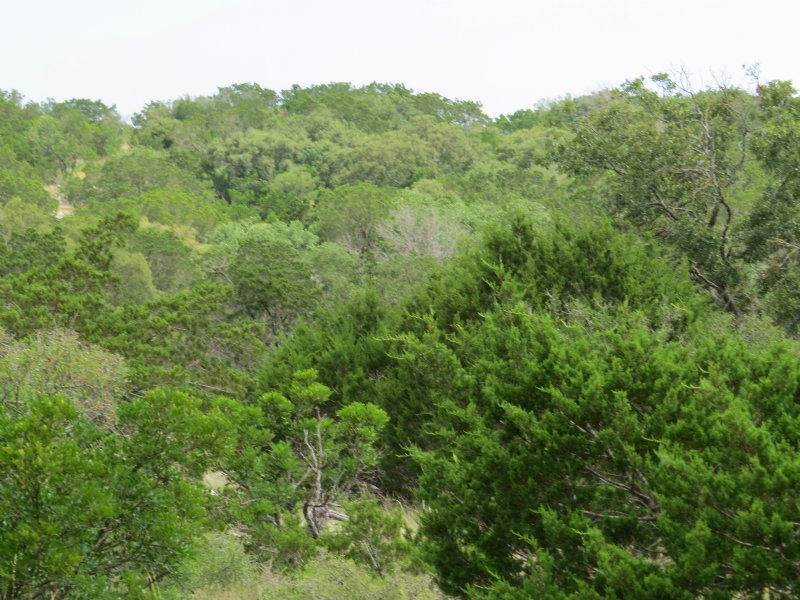Free ranging exotics land for sale by owner for Free land in texas