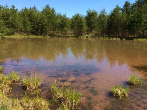 218 Acres Prime Hunting Land Pond : West Union : Steuben County : New York
