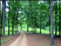 5 Acres In Hinds County : Terry : Hinds County : Mississippi