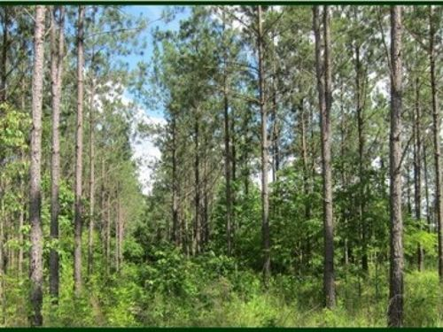 79.7 Acres In Attala County In Sall : Durant : Attala County : Mississippi
