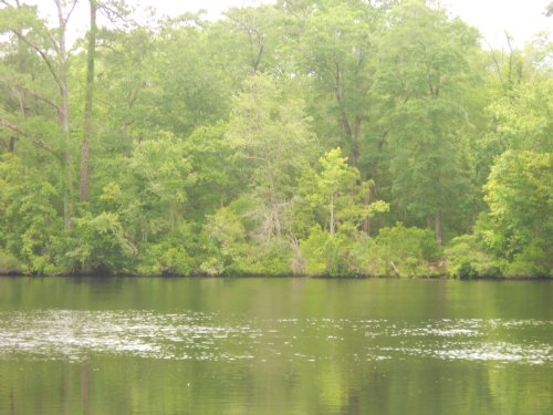 Extensive Frontage Black River : Georgetown : South Carolina