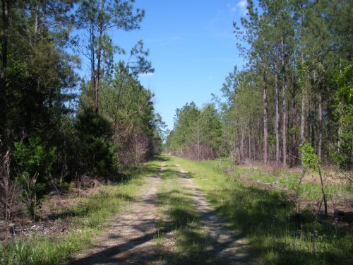 Hunting & Timber Tract : Georgetown : South Carolina