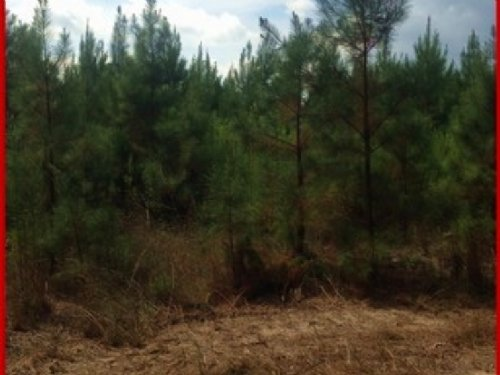 26 Acres In Rankin County (Tract Tw : Pelahatchie : Rankin County : Mississippi
