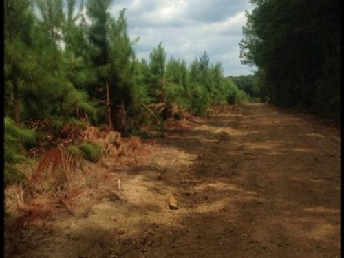 26 Acres In Rankin County (Tract On : Pelahatchie : Rankin County : Mississippi