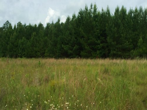 Sportsman Spot- Pine Plantation : Lucedale : George County : Mississippi