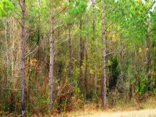 Sanders Loop- Sugartown : Sugartown : Beauregard Parish : Louisiana