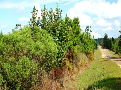 Sandy Branch Parcel B : Glenmora : Rapides Parish : Louisiana