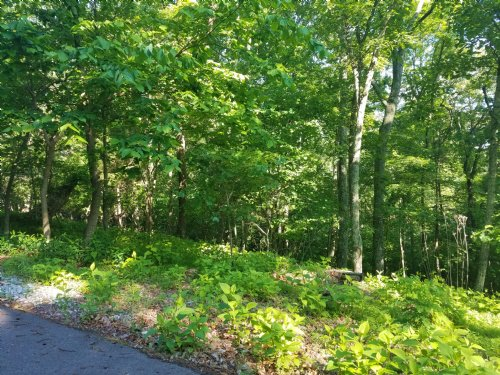 1.83 Acre Wooded Lot In Chelaque : Mooresburg : Hawkins County : Tennessee