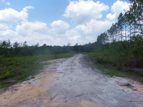 37 Acres Cleared For Homesite : Jesup : Wayne County : Georgia