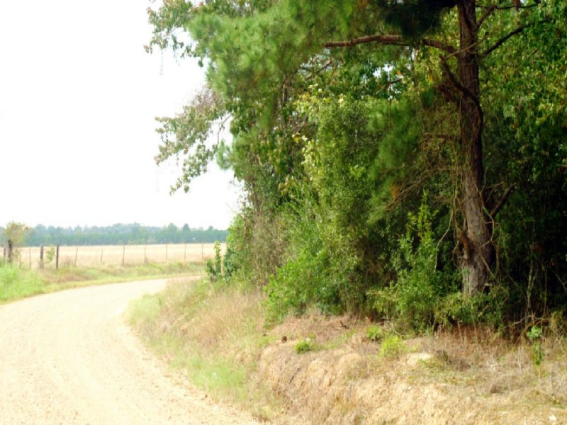 Methodist Camp Road - North : Reeves : Allen Parish : Louisiana